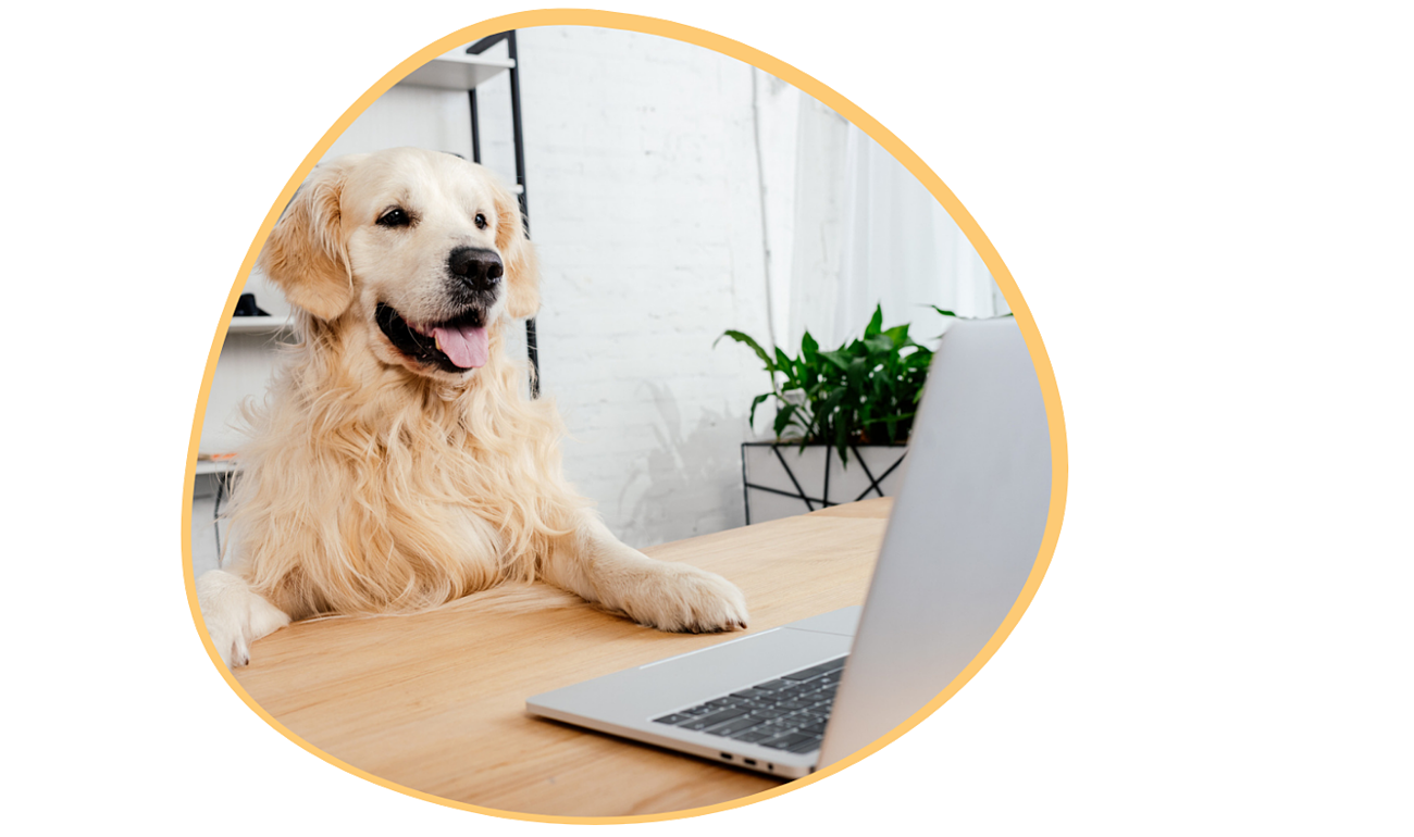 Dog-daycare-software