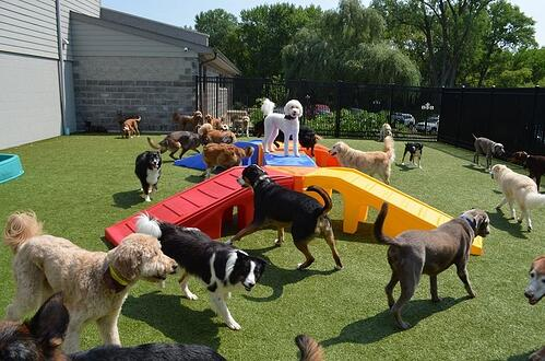 Modular dog daycare playground equipment is easy to configure for your unique space.