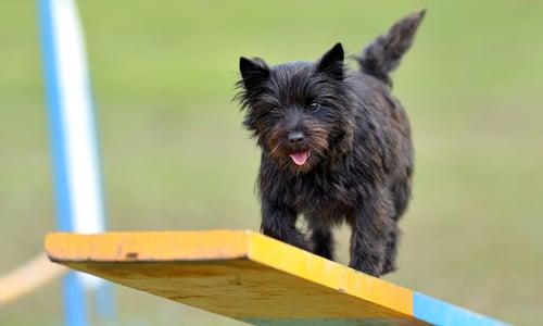dog daycare playground equipment