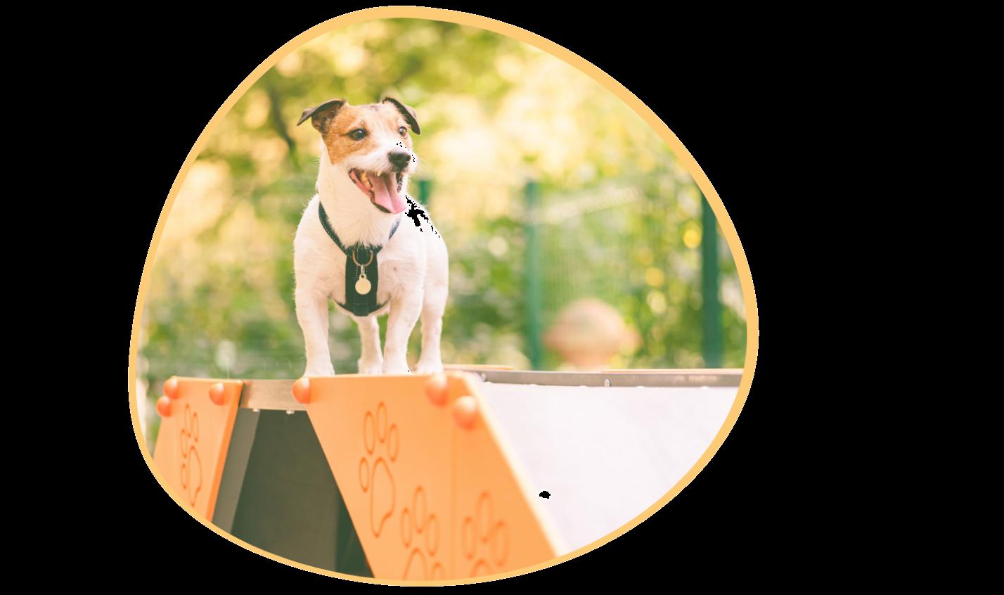 dog-kennel-software