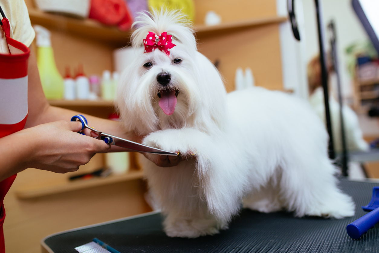 dog grooming software