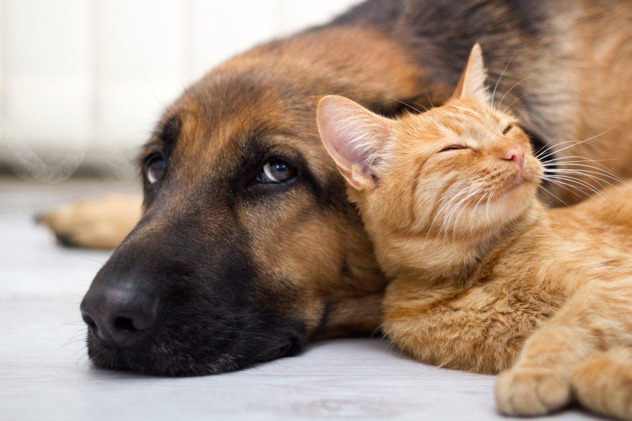 about revelation pets