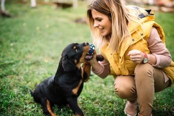 5 Dog Behavior Tips for Kennel & Dog Daycare Attendants