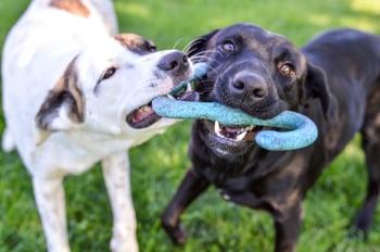 Dog Temperament Tests: Best Practices for Daycares