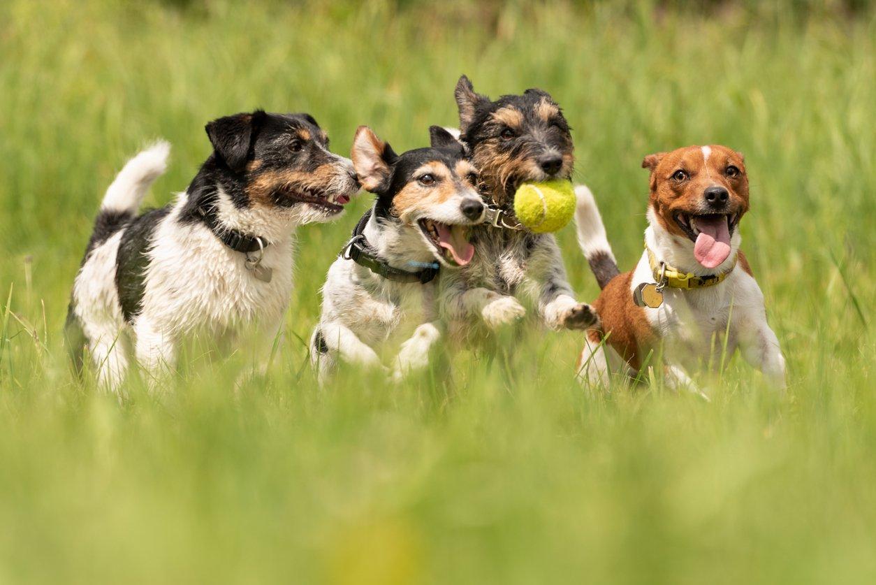 dog daycare software