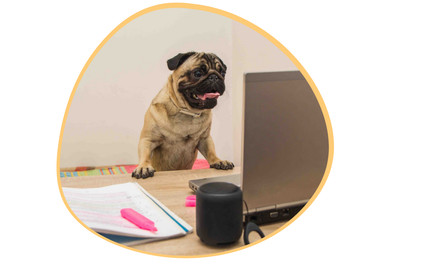 pet-care-software-features
